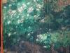 Véranda : détail fleurs